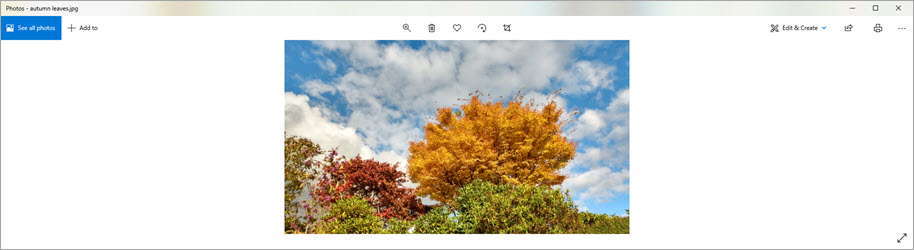 Zoom - screen share image - horizontal space - Autumn leaves 4