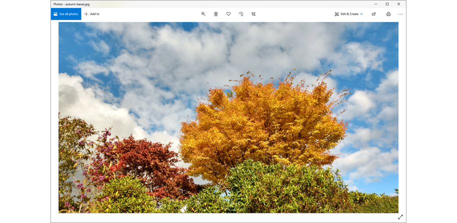 Zoom - screen share image - just right - Autumn leaves 4